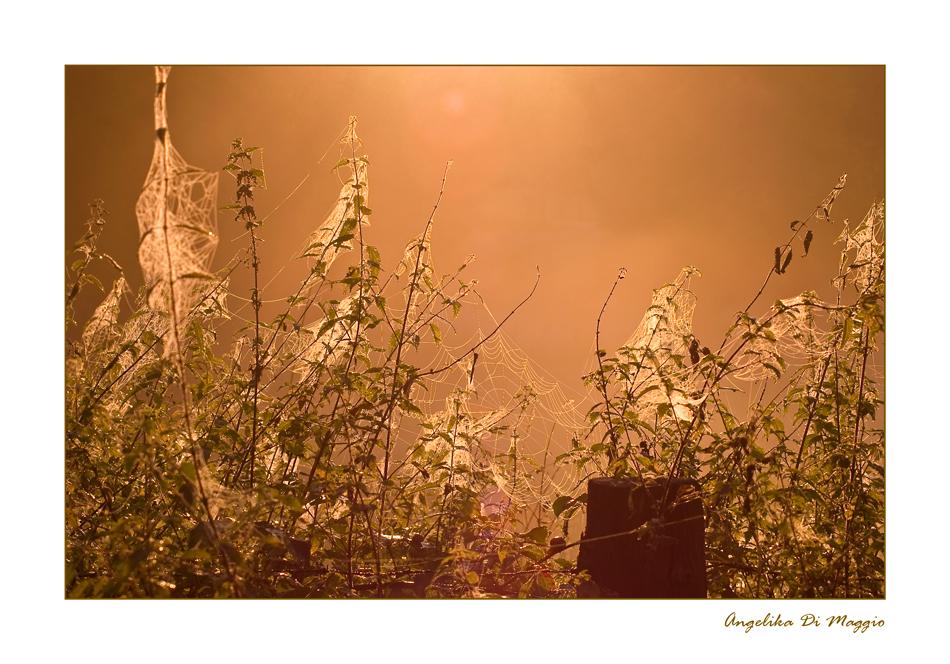 Früh Morgens im Herbst