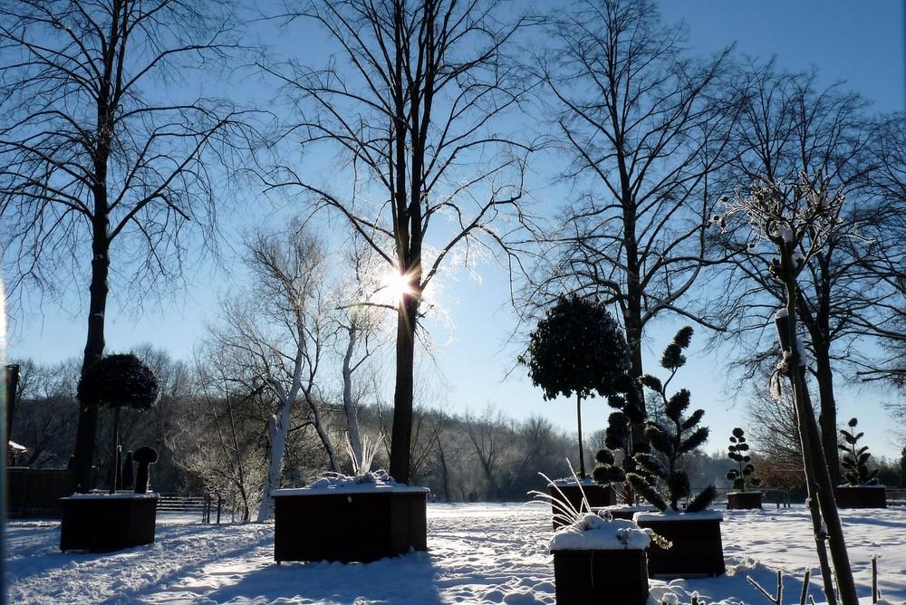 Früh morgens im Schnee