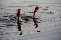 Früh Schwimmt wer ein harter Mann ist
