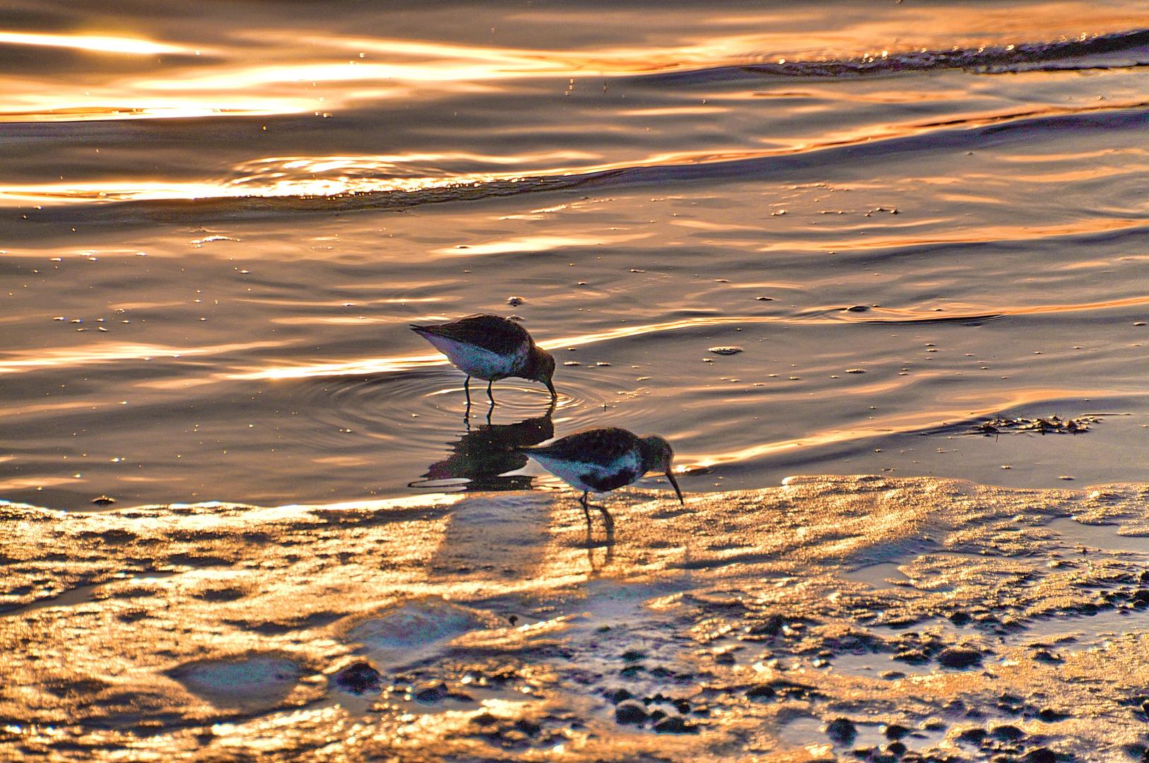 Frühaufsteher- Der frühe Vogel fängt den Wurm