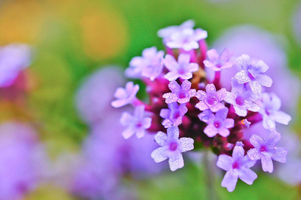 Frühe Farben