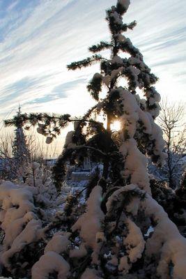 Früher gab es noch Schnee zu Weihnachten (I)