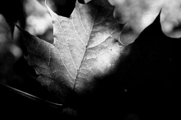 Früher Herbst