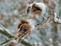 Früher Winter II