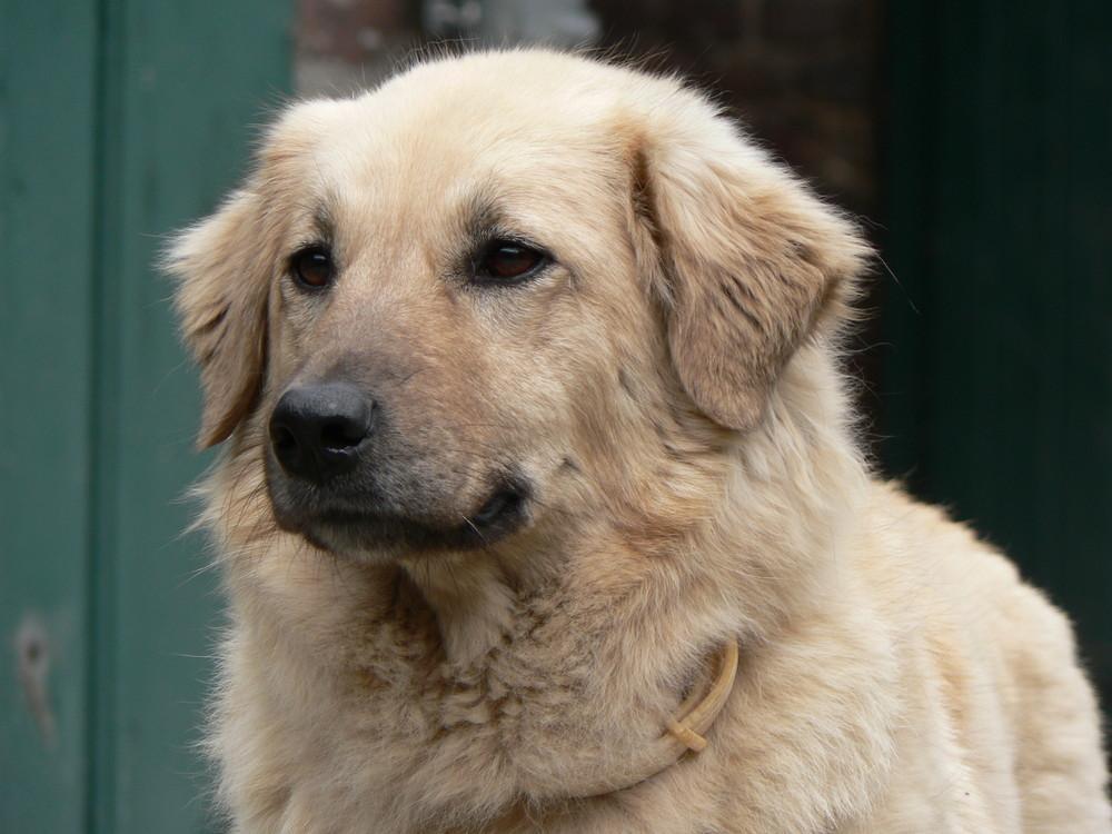 früherer Istanbuler Strassenhund ohne Namen - jetzt Lilo