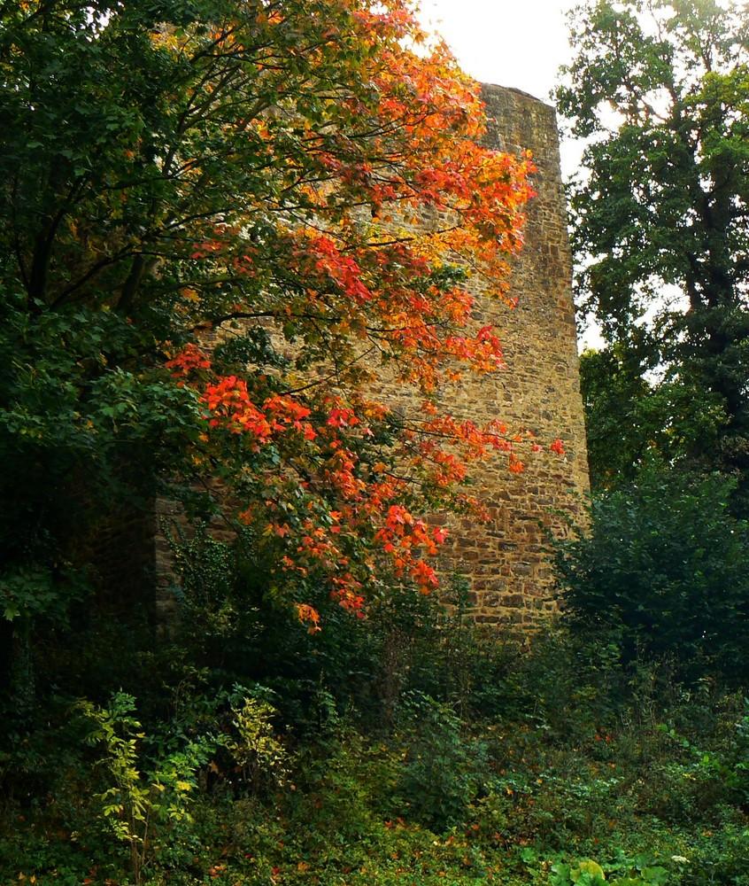 Frühes Herbstlaub