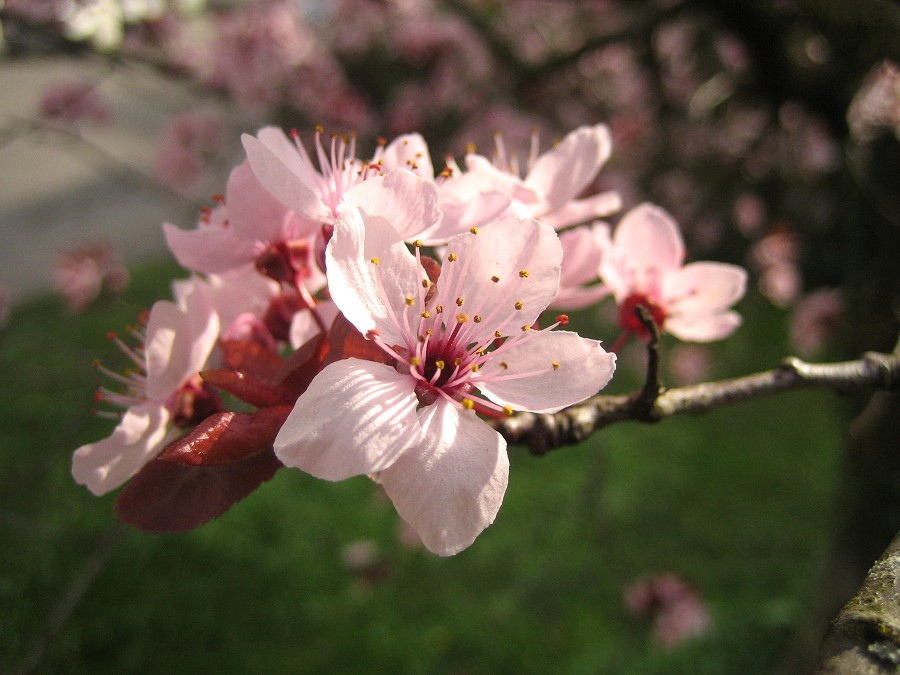 Frühjahr - Blüte