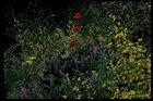 Frühjahr - wenns noch blüht . . .!