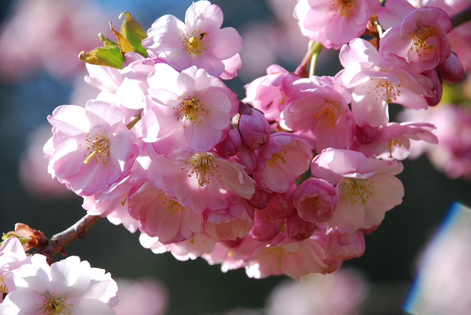 Frühjahrs Freude