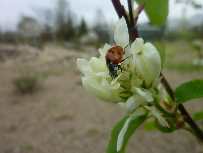Frühjahrs-Glücksbringer