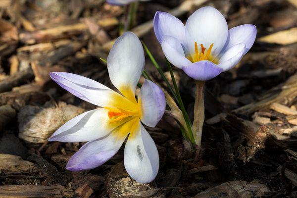 Frühjahrsblüher...