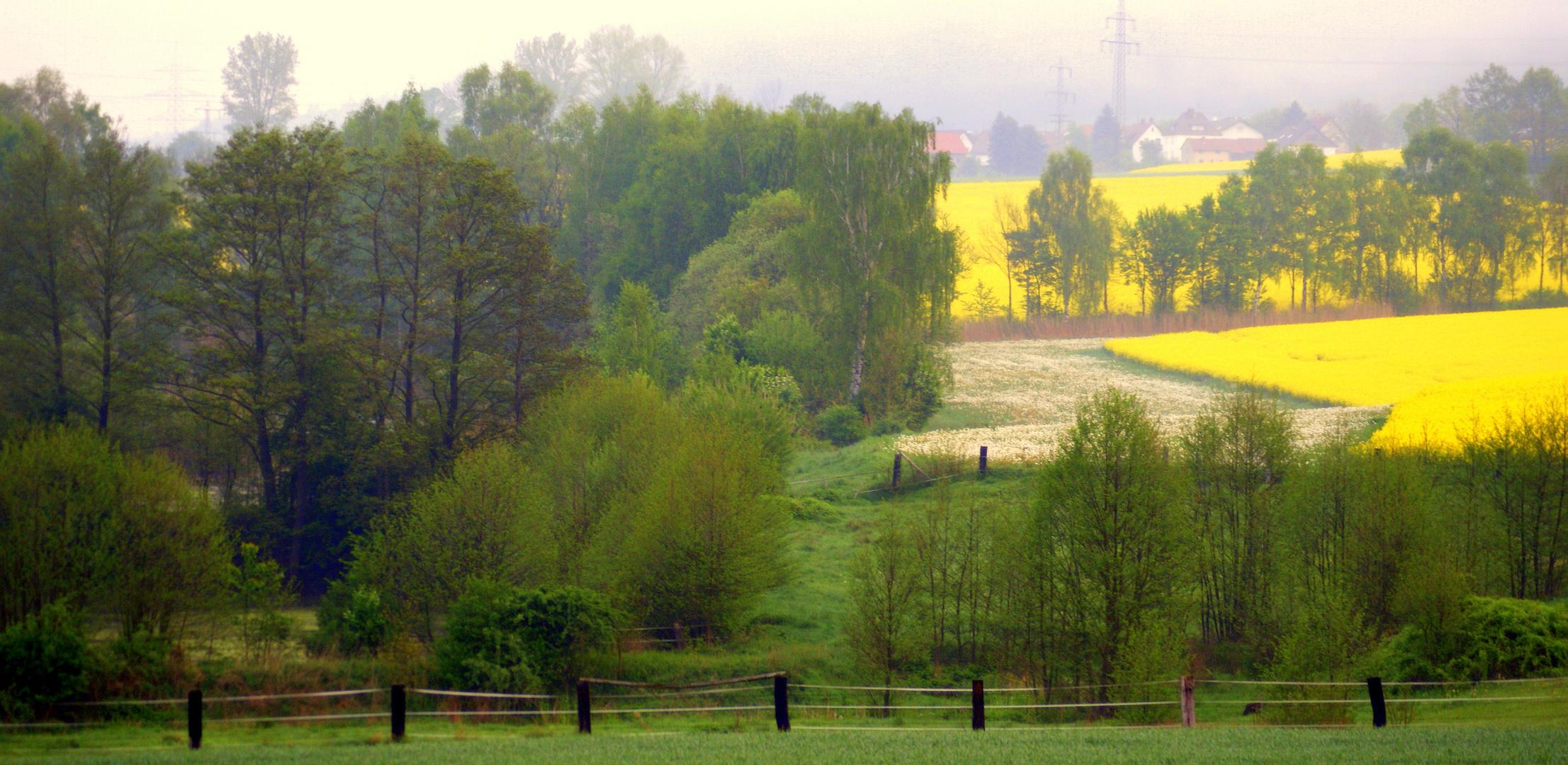 Frühjahrsfarben im Morgendunst