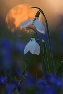 Frühjahrsgefühle...