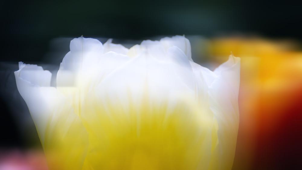 Frühjahrsgruß