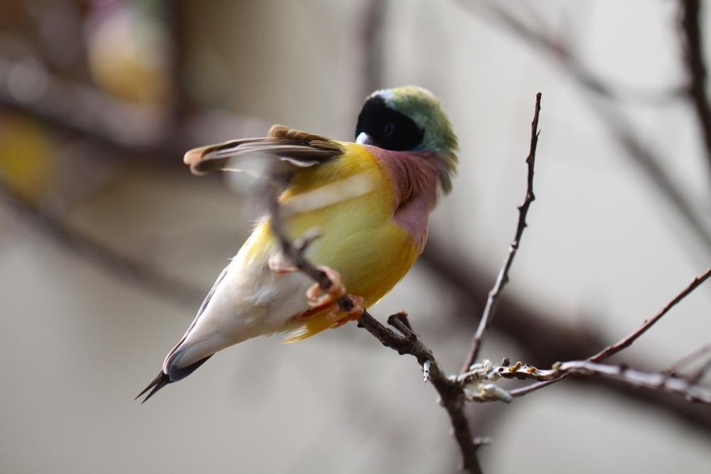 Frühjahrsputz bei den Kubafinken