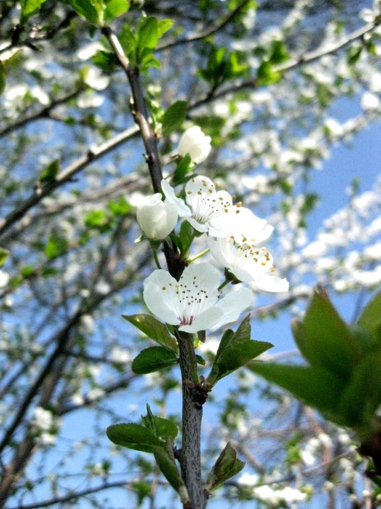 Frühliiing
