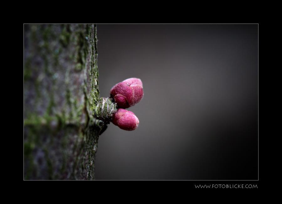 FrühlilngsSpuren #4