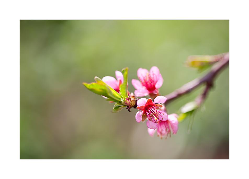Frühling #05