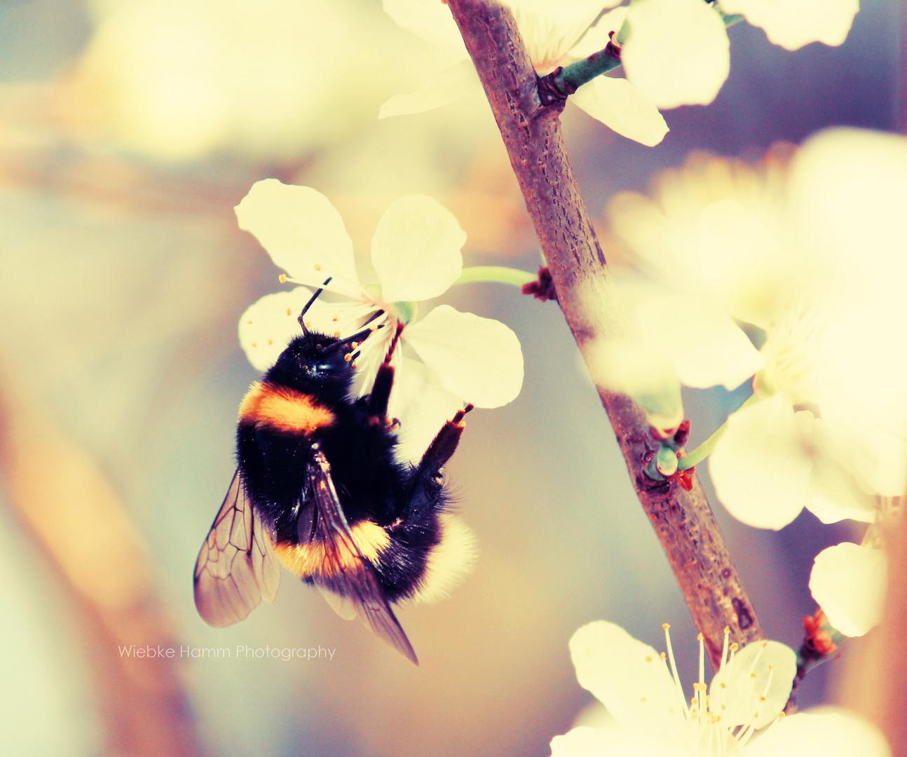 Frühling :)