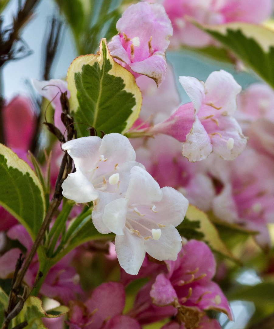 Frühling