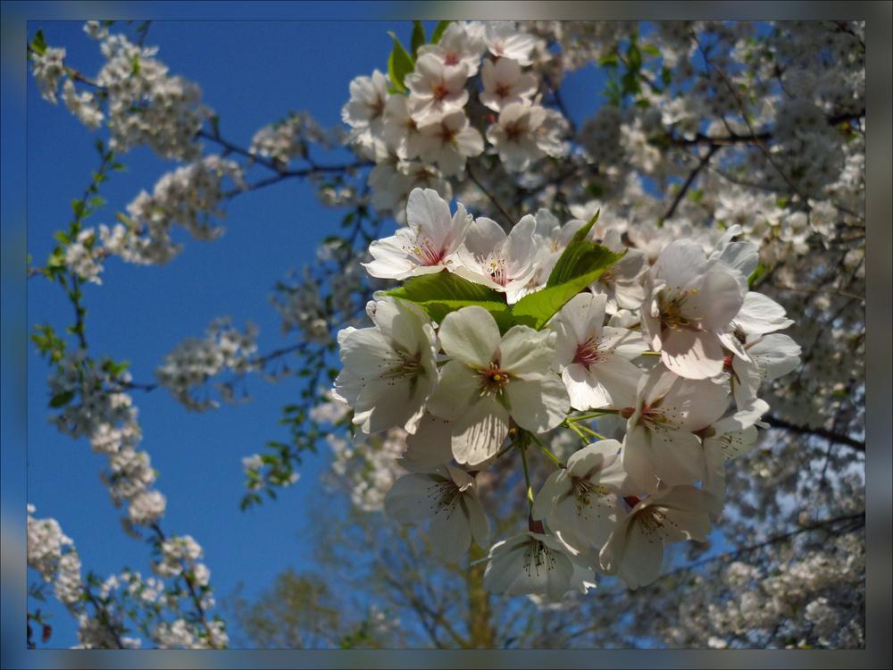 Frühling ( 1 )