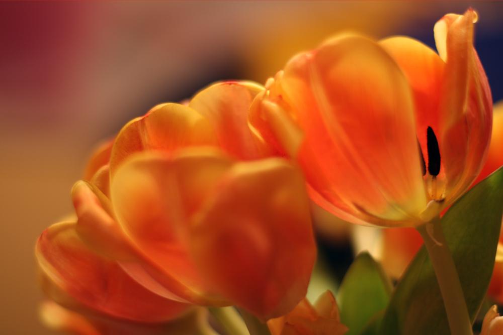 Frühling :-)
