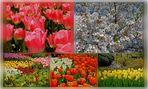 Frühling ( 2 )