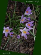 Frühling 2008 - ein sanfter Anfang