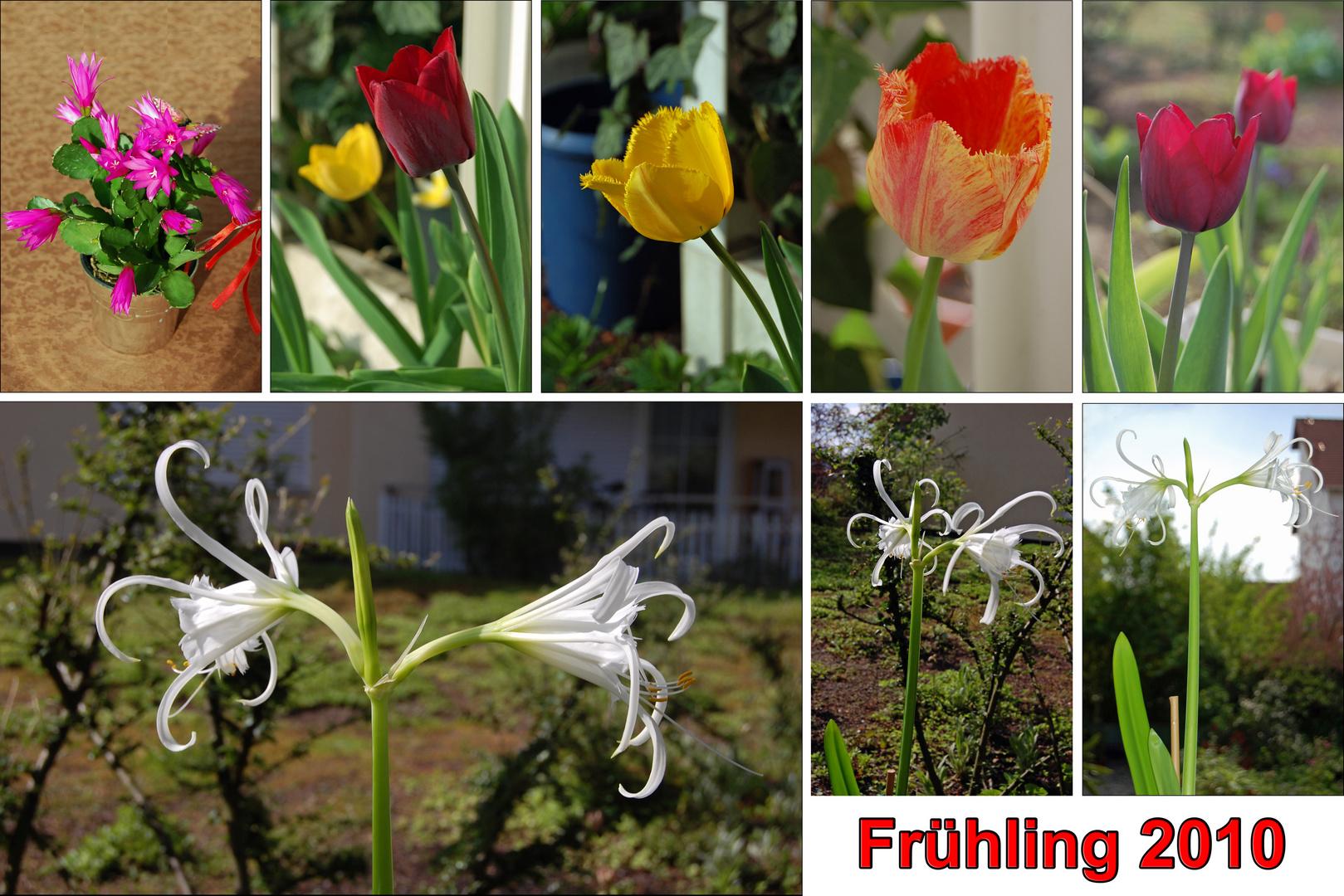 Frühling 2010 - die Dritte