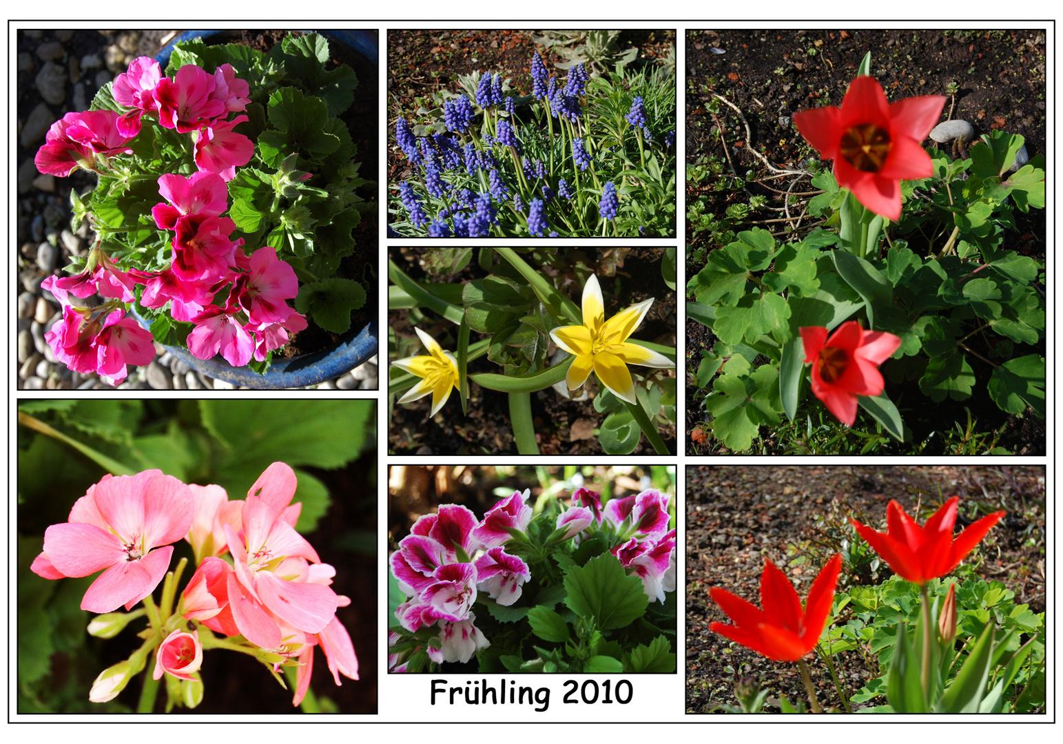 Frühling 2010 - die Zweite