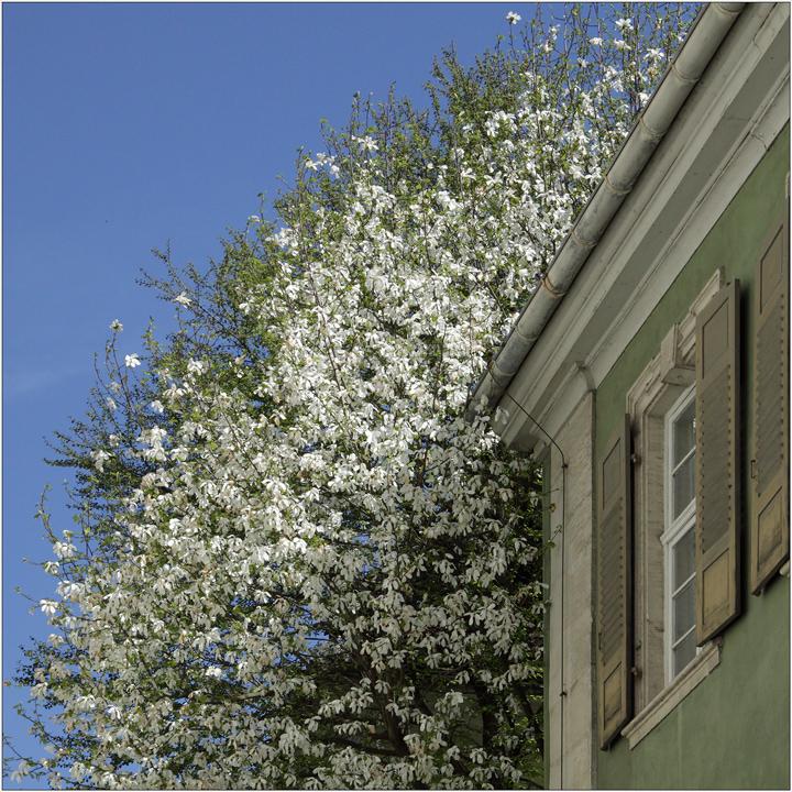 Frühling 2011_1
