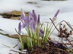 Frühling 2013 - Ankunft verspätet