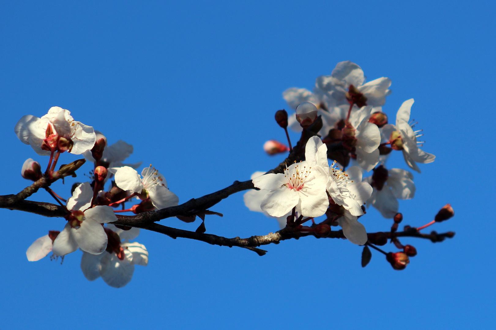 Frühling 2013 auf Mallorca