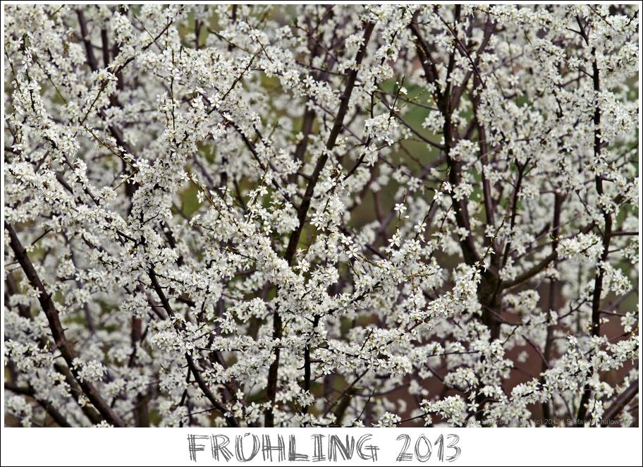 Frühling 2013