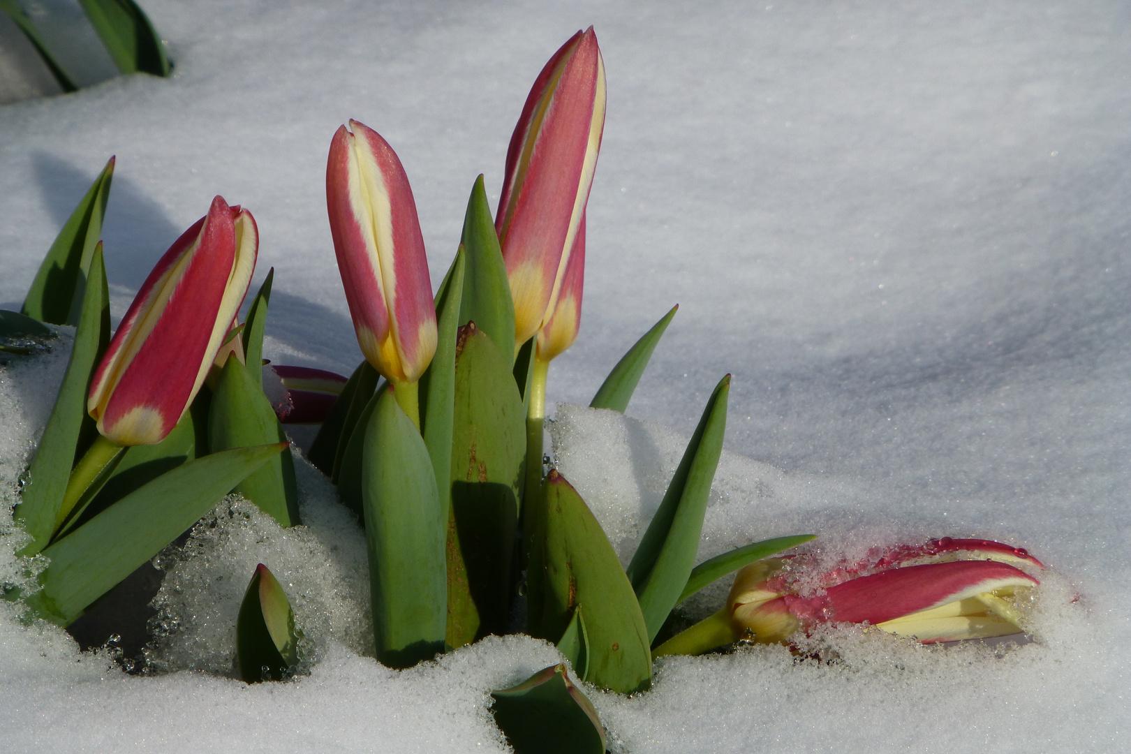 Frühling 2013....