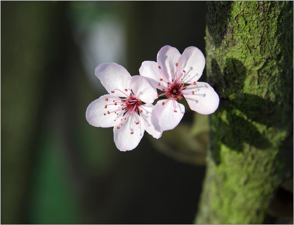 Frühling 2014_2