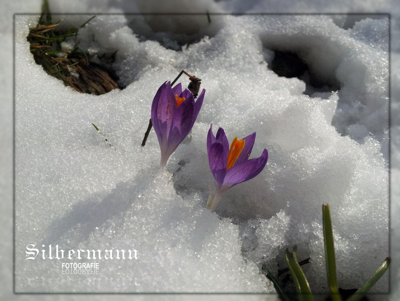 ??Frühling??