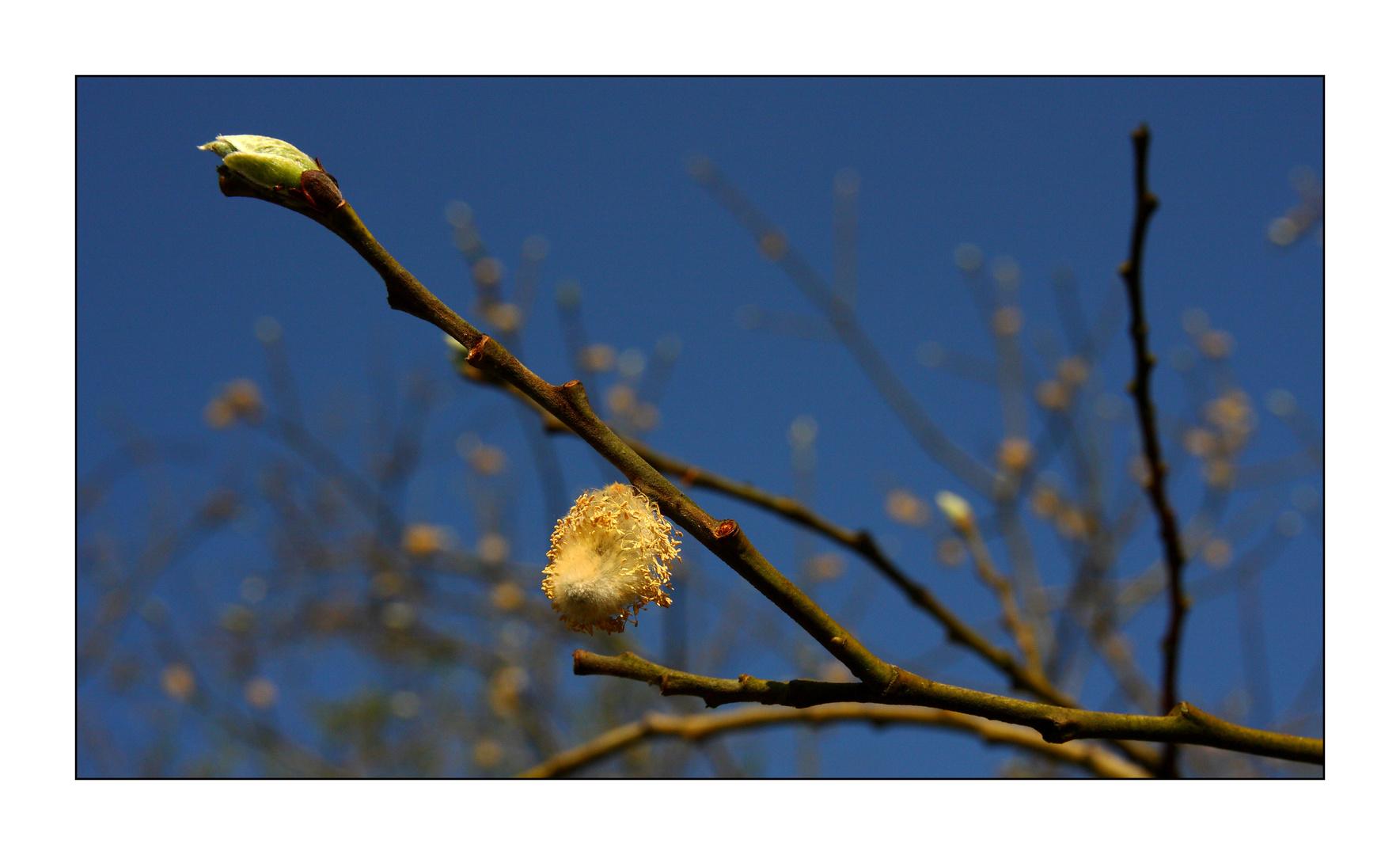 Frühling #3