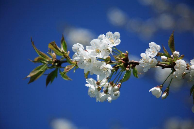 Frühling 3