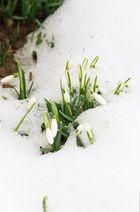 Frühling.............