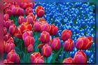 Frühling...............