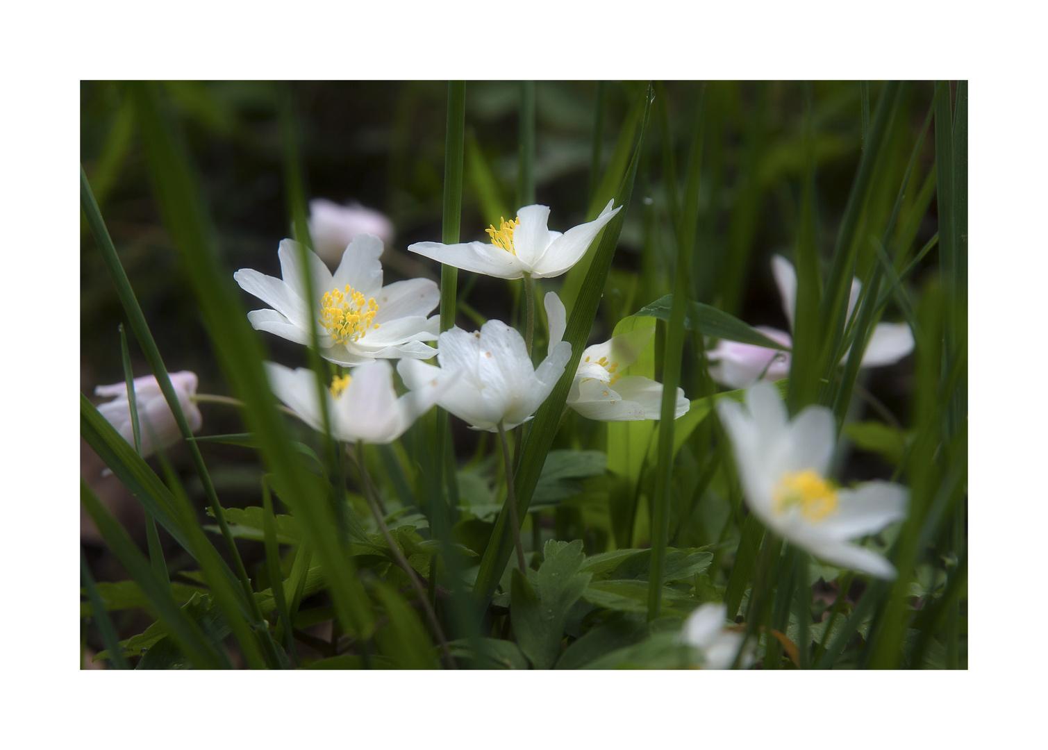 Frühling ......