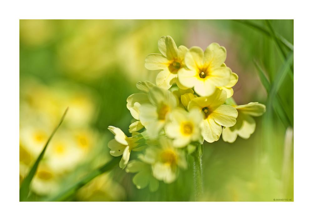 Frühling (4)