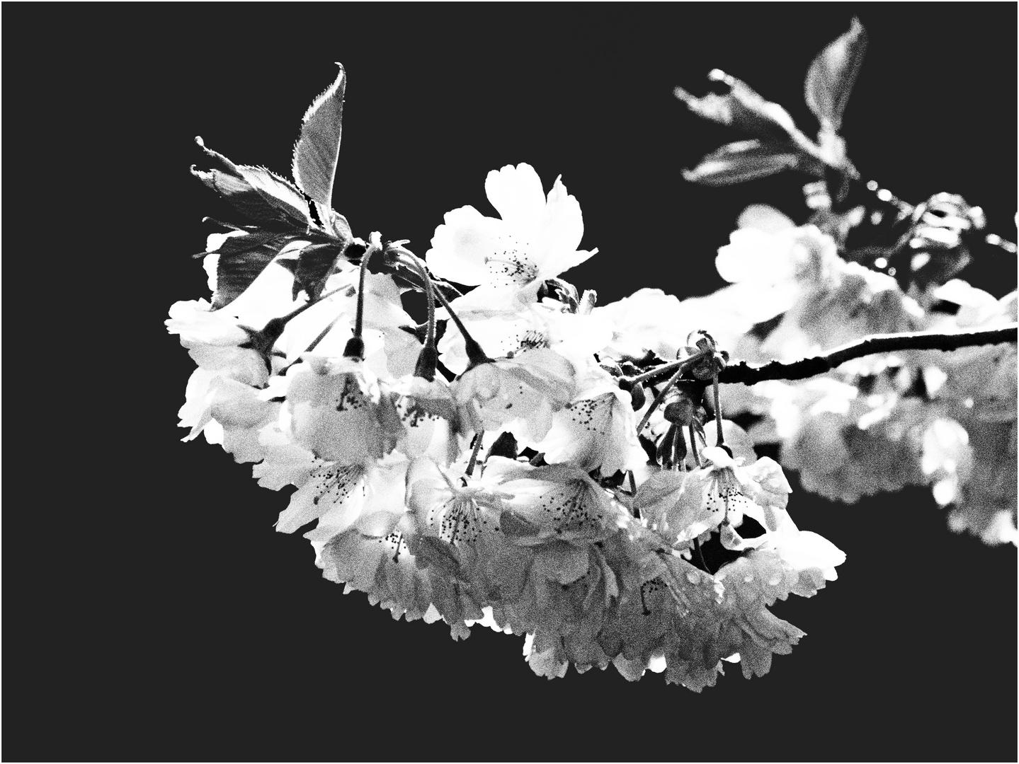 Frühling ..