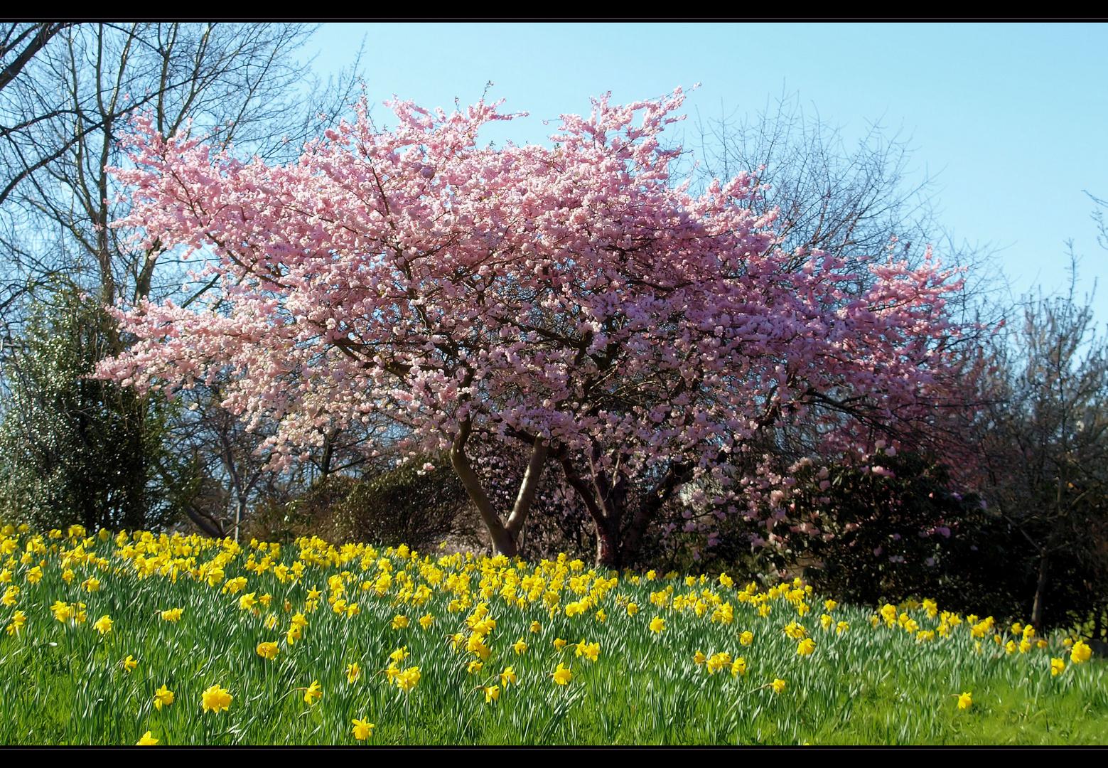 ....Frühling.....