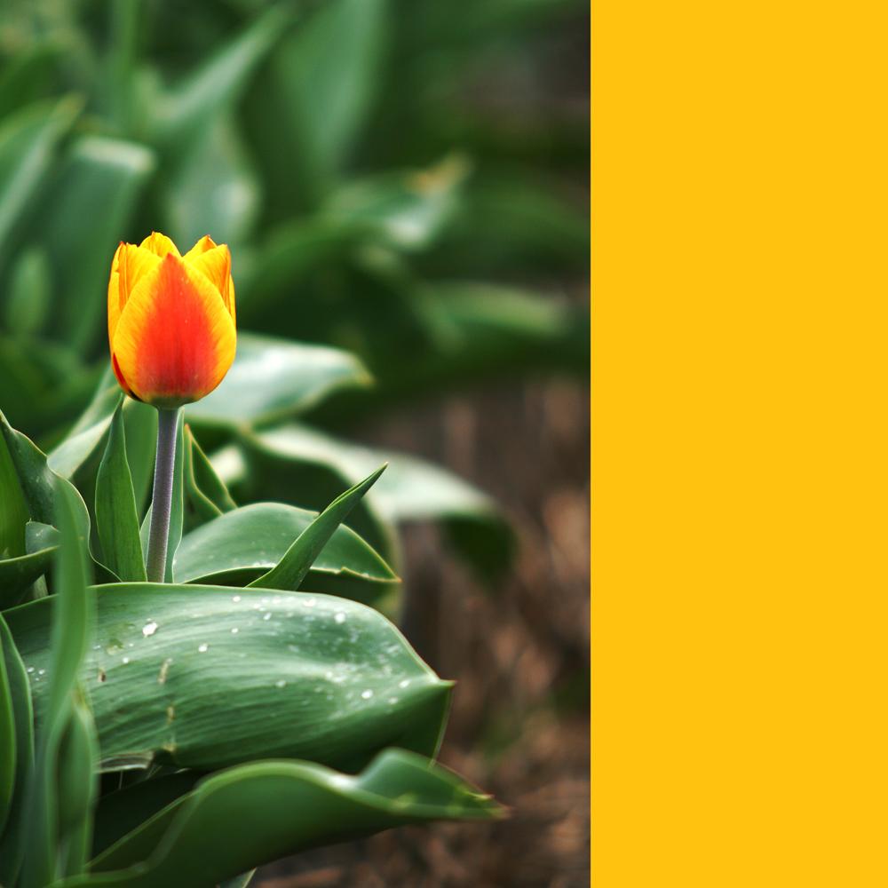 Frühling |...