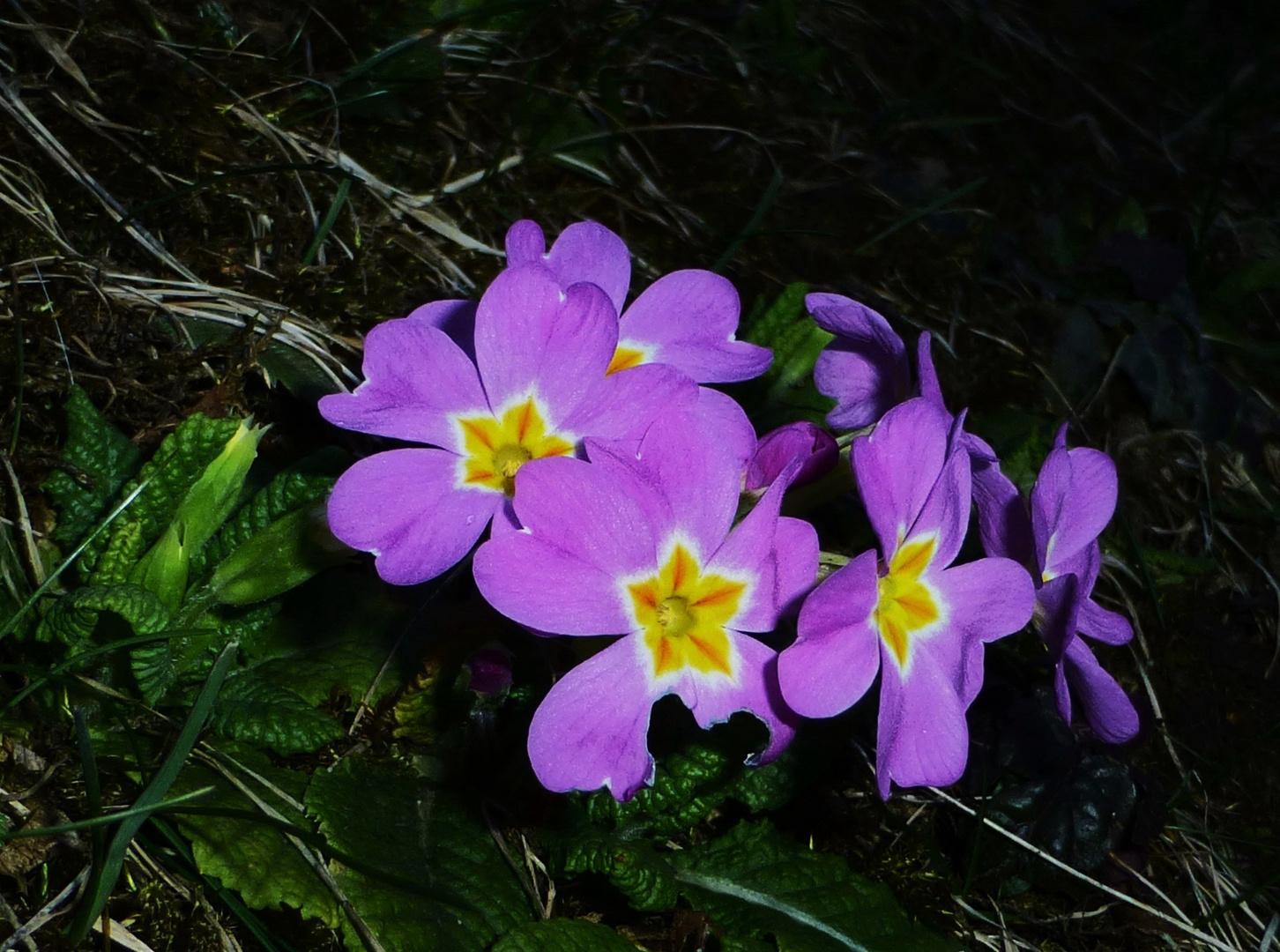 * Frühling *