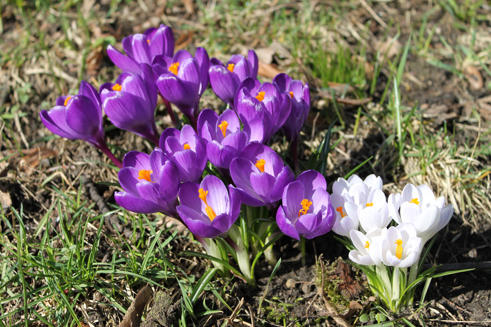 ***Frühling***