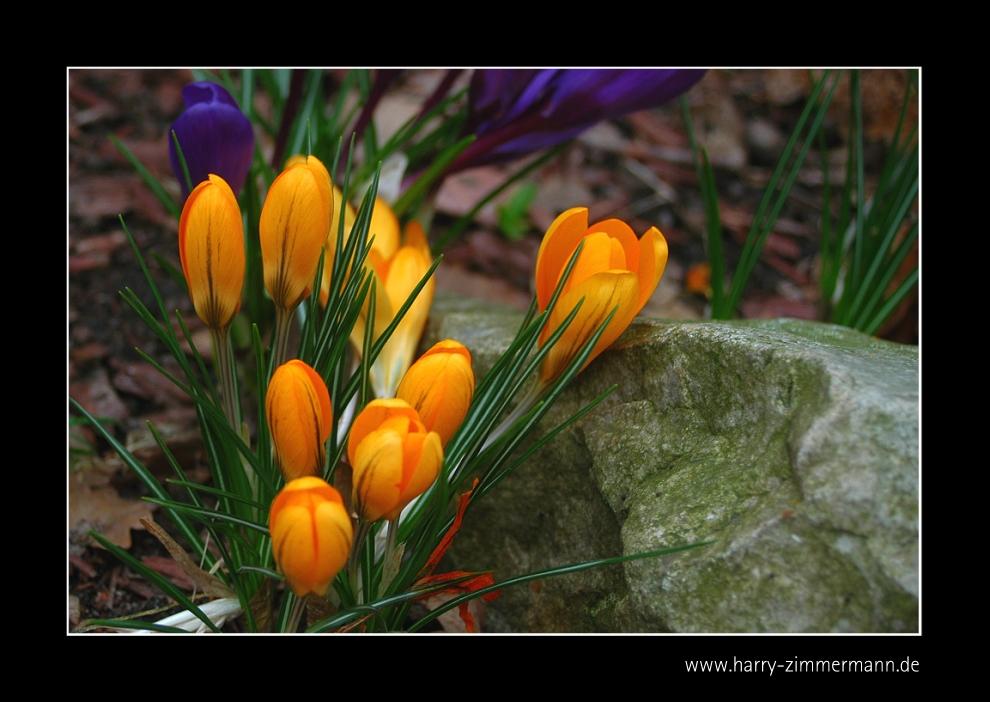 Frühling-6