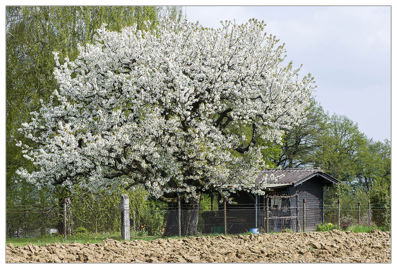 .... Frühling ....